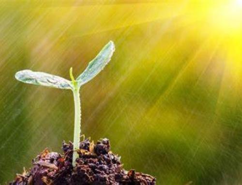 La crescita è sempre per attrazione e mai per costrizione.